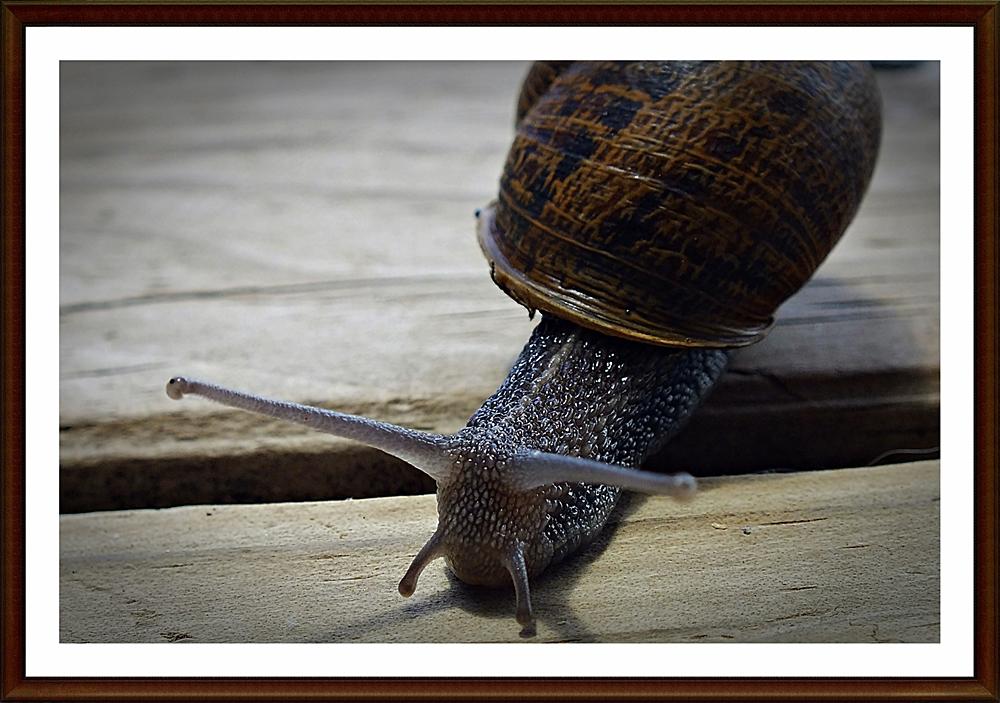 sammy snail - small