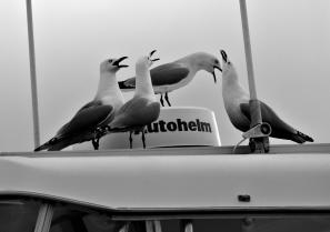 The Autohelm Quartet